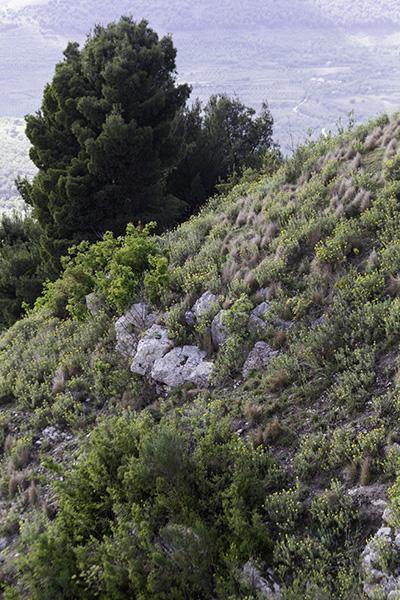 16 Flora near the Castle of Berat, Albania, in 2017