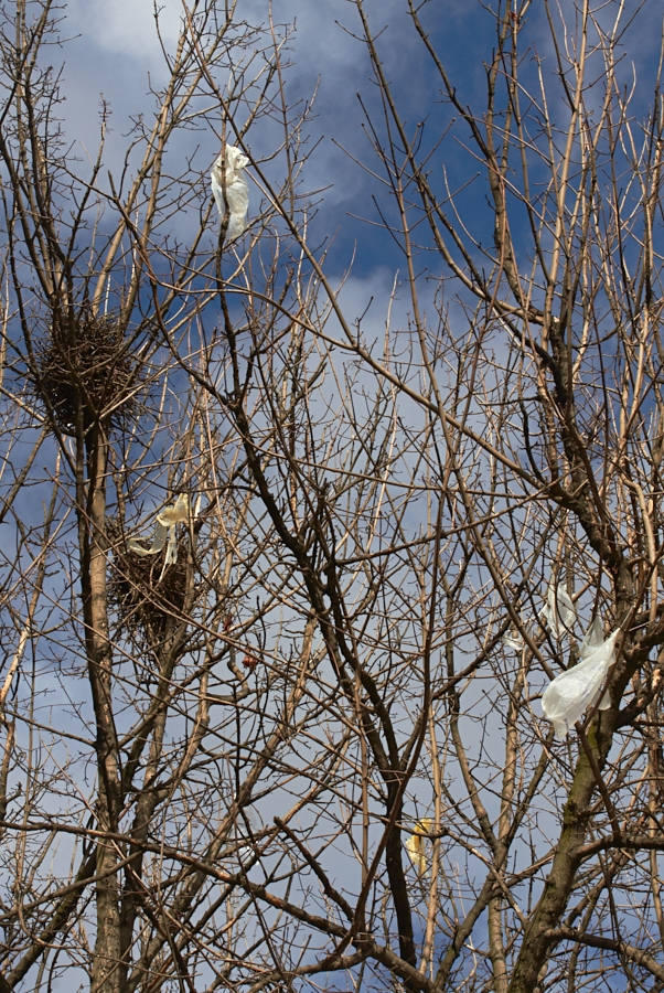 025 Trees with nests and plastic in North Mitrovica, Kosovo, 2016