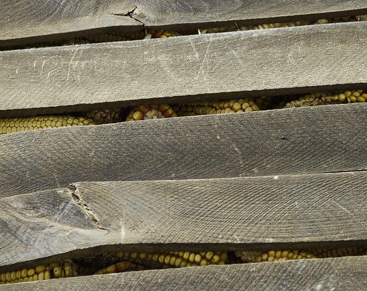 001 Stored maize in Hoçë e Madhe/Velika Hoča, Kosovo