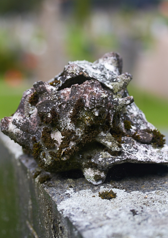 008 Shell on grave, Fjære Church -- Grimstad, Sørlandet, 2014